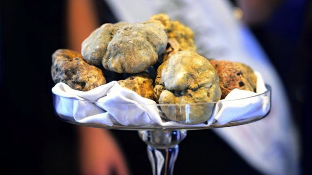 White truffles at auction