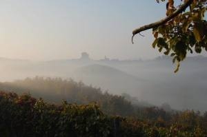 Nebbiolo Wine of the Langhe Region - Perfect to Accompany Autumn Dishes