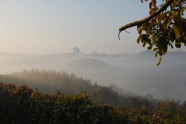 Nebbiolo Wine of the Langhe Region – Perfect to Accompany Autumn Dishes